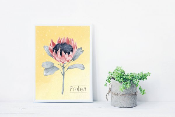Protea - farmhouse decor - art print
