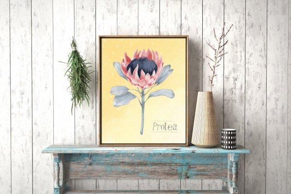 Rustic farmhouse, art print, protea