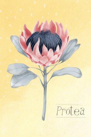 Protea - Art Print - Australian Native plants - vintage botanical print