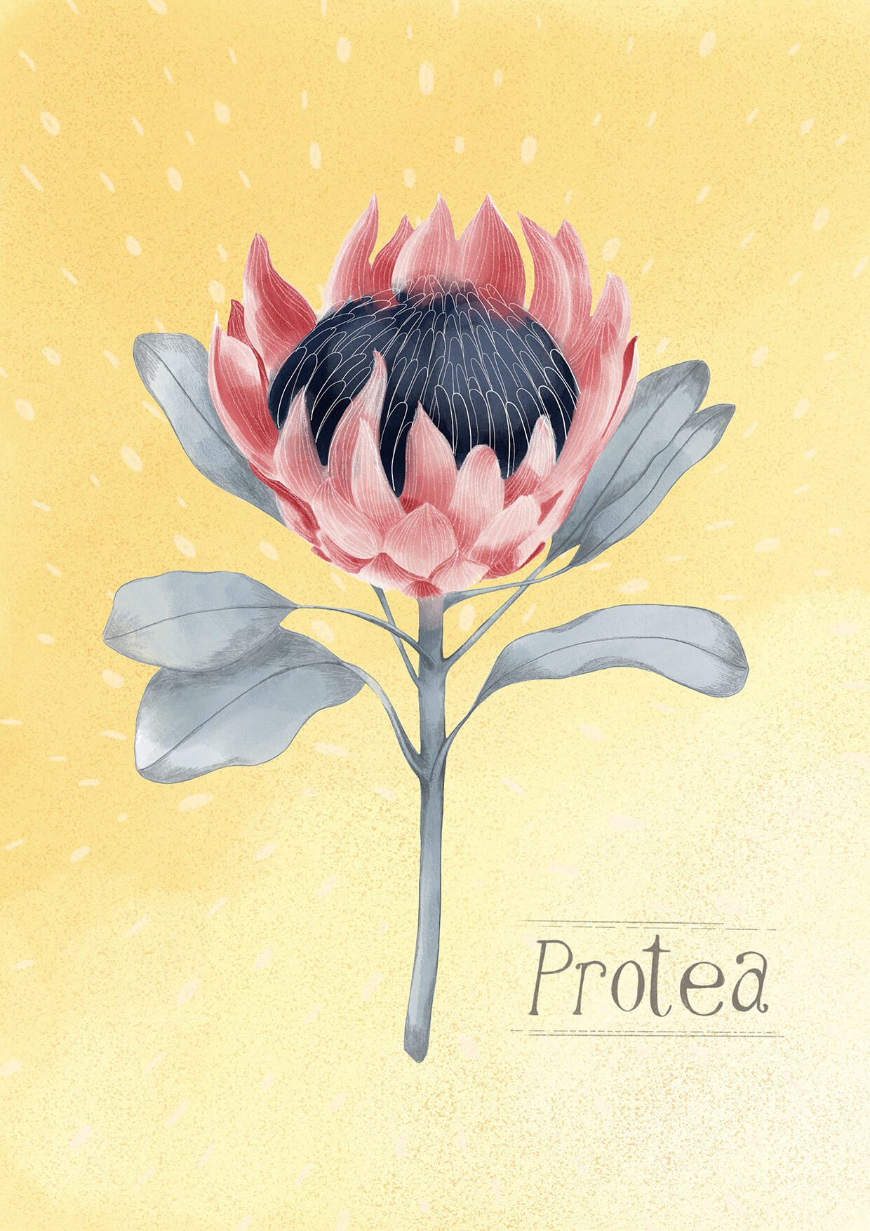 Protea Greeting Card, Erin Duncan Creative