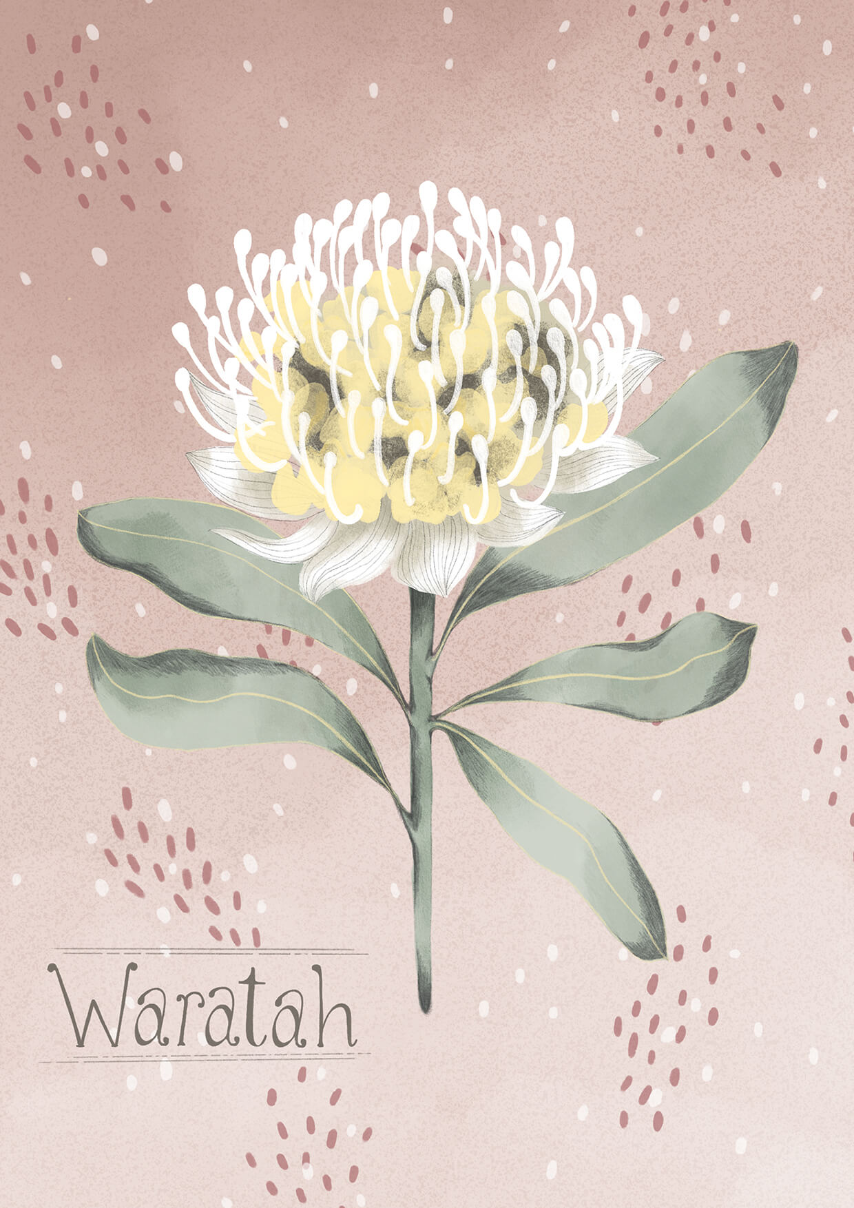 Waratah Greeting Card, Erin Duncan Creative